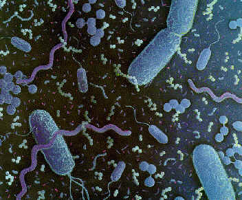 Scientists Analyze Why Do Bacteria Fight Consistently Inside Human Body