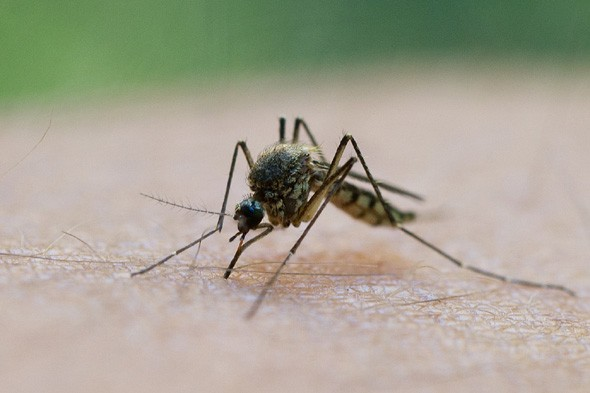 Dengue Outbreak in Madeira Concerns HPA