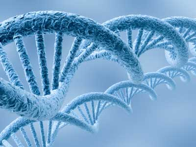 Researchers Locate Gene Responsible for Type 1 Diabetes Risk