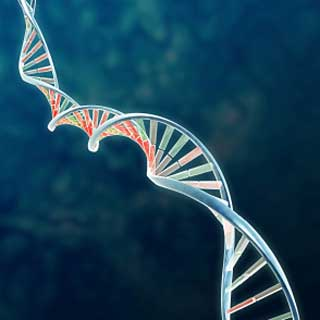 New Memory-Erasing Gene Can Treat Trauma: Research