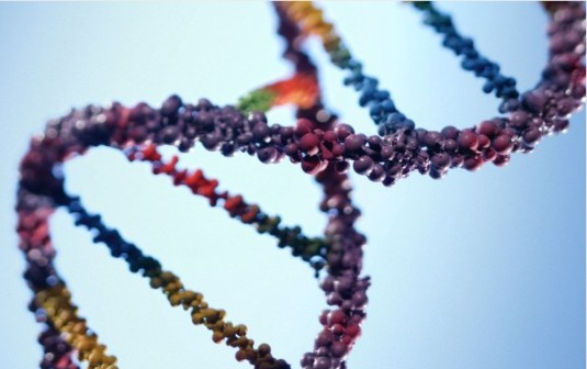 Genetic Links to Eating Disorders Recognized: Research