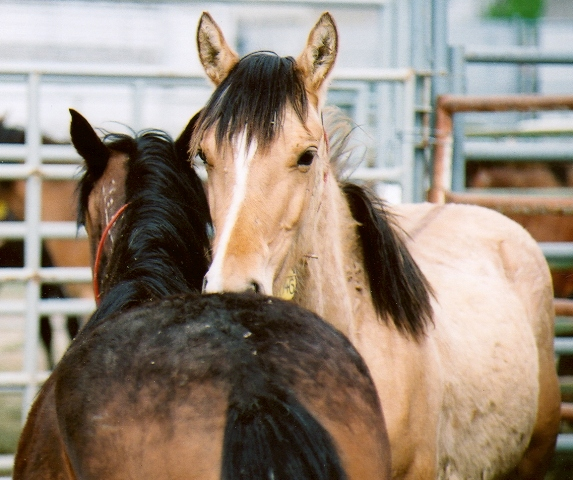 Scientists Research on Gut Bacteria found in Horses