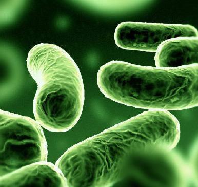 People Take Legal Action over Legionellosis Outbreak