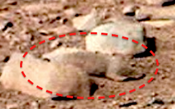 NASA-Rover-captures-image-Rat-on-MARS.png
