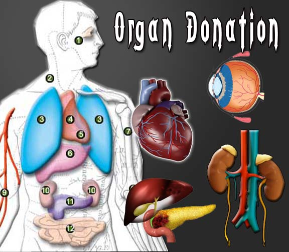 organ donation Mohan foundation is a not for profit organization that promotes organ donation and transplantation in india since 1997.