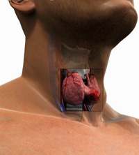 Researchers Cite Stain-Repellent Chemical to Cause Thyroid