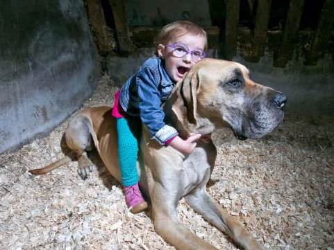Dog Detects Little Girl's Epileptic Seizures