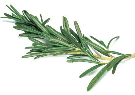 Rosemary and Spearmint Good for Brain: Study