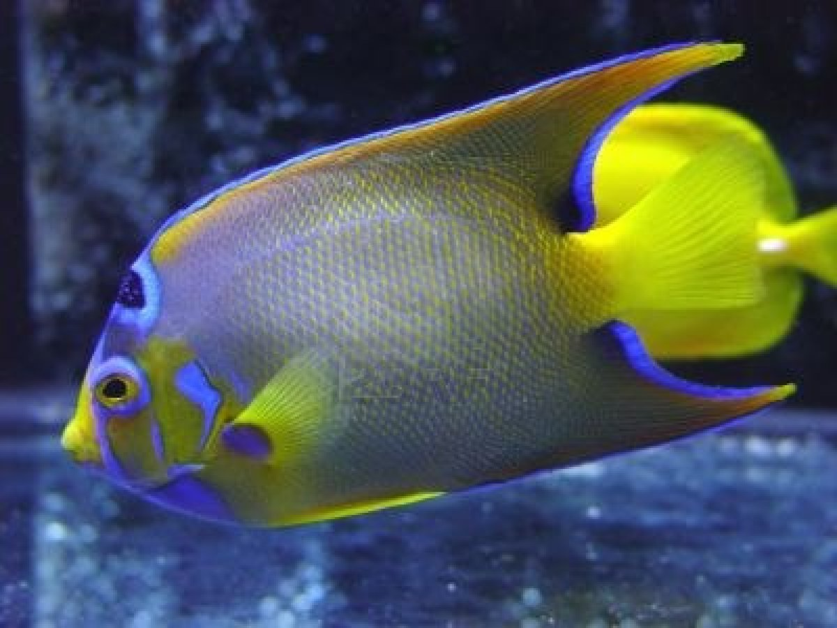 tropic fish - photo #27